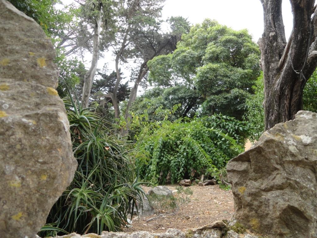 El Jardin Olvidado Concha Huerta Arte Y Cultura